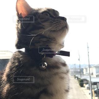 カメラを見ている猫の写真・画像素材[973485]