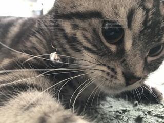 近くに猫のアップ - No.973521