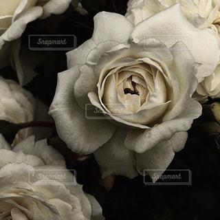 近くの花のアップ - No.1064743