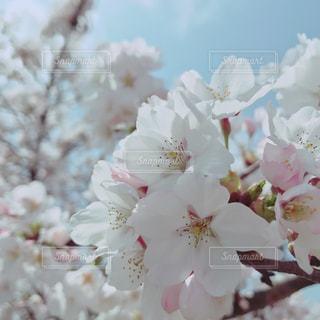 近くの花のアップ - No.1106480
