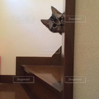 鏡の前で座っている猫の写真・画像素材[1257895]
