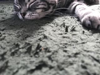 地面に横になっている猫の写真・画像素材[1325984]