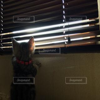 窓の前に座っている猫の写真・画像素材[1328036]