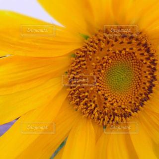 花,夏,ひまわり,黄色,色