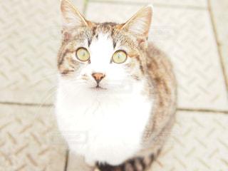 猫 - No.285302
