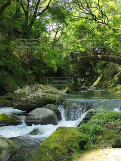 ツリーの横にある大きな滝の写真・画像素材[1179171]