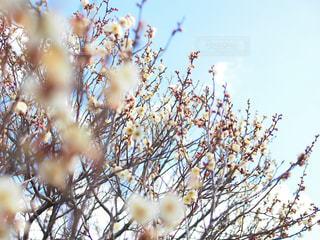 近くの木のアップの写真・画像素材[1388246]