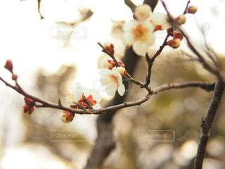 近くの木の枝の写真・画像素材[1388260]