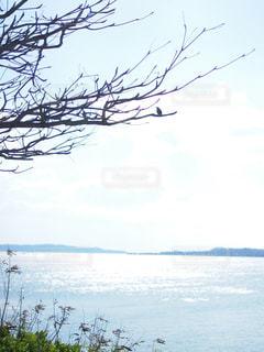 水の体の横にあるツリーの写真・画像素材[1390439]
