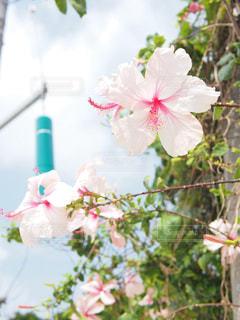 植物にピンクの花の写真・画像素材[1391736]