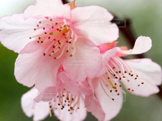 近くの花のアップの写真・画像素材[1793330]