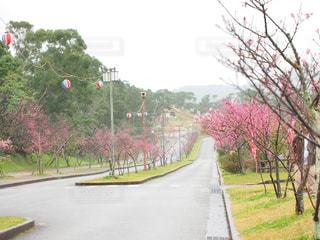 桜祭りの写真・画像素材[1793787]
