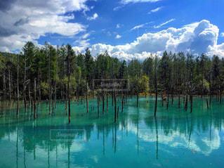 青い池♡の写真・画像素材[1217925]