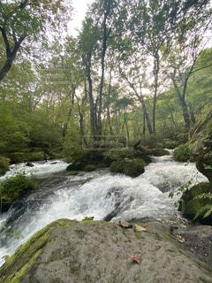 自然,森林,屋外,川,水面,滝,樹木,青森,運河,奥入瀬,草木,国内旅行,奥入瀬渓流,ストリーム