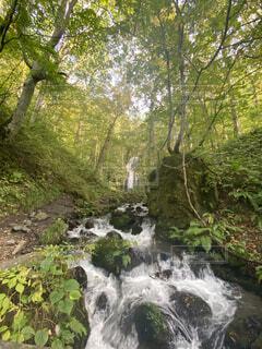 自然,秋,森林,屋外,川,水面,景色,滝,樹木,苔,青森,奥入瀬,草木,国内旅行,奥入瀬渓流