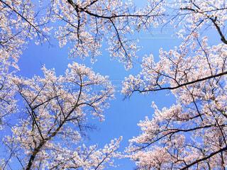 春 - No.416201