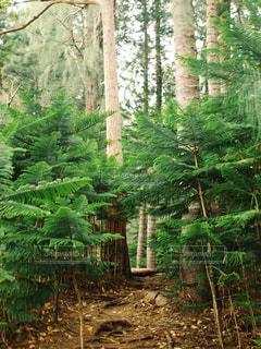 森の写真・画像素材[459797]