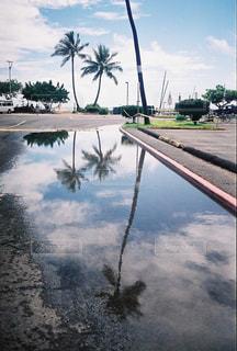木,雨,植物,駐車場,水たまり,反射,旅行,ヤシの木,rain,rainy,ハワイ,水溜り,梅雨,天気,雨の日,天気予報