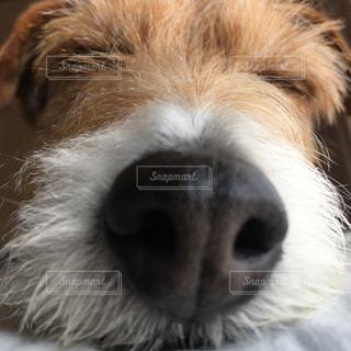 犬 - No.474261