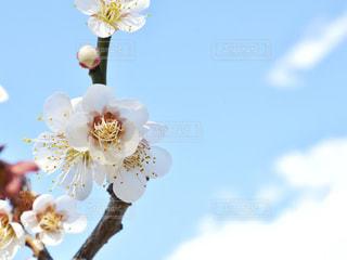 春の訪れの写真・画像素材[3023907]