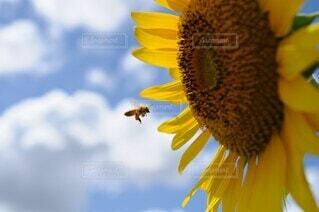 ハチミツどうぞの写真・画像素材[4673502]