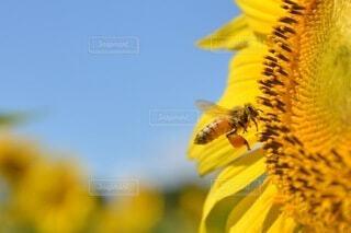 蜂の仕事場の写真・画像素材[4673523]