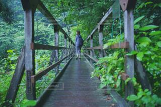 木製の橋の上に座っている鳥の写真・画像素材[770668]