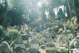 庭園の人々 のグループの写真・画像素材[932793]