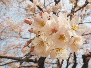 春の写真・画像素材[402077]