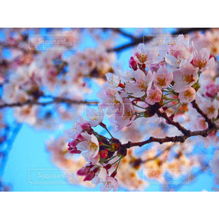 春の写真・画像素材[402080]