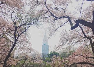 春 - No.420009