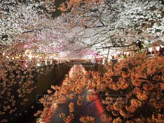 春の写真・画像素材[422982]