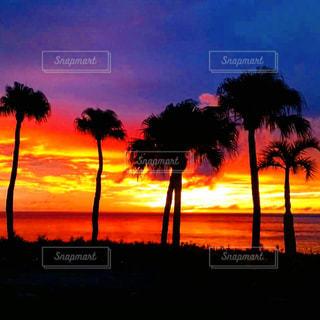 徳之島の光の写真・画像素材[1268801]