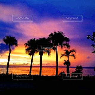 海,空,夕日,綺麗,夕暮れ,神秘的,ヤシの木,徳之島,草木