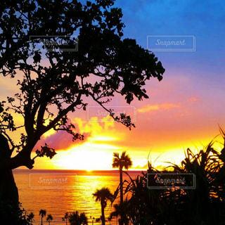 草木の奥に沈む夕日の写真・画像素材[1290308]