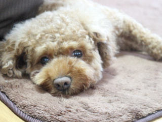 犬,夏,暑い,ペット,可愛い,愛犬