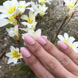 花を持っている手の写真・画像素材[1161600]