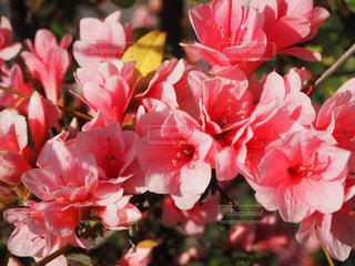 花,くじゅう花公園,花絶景