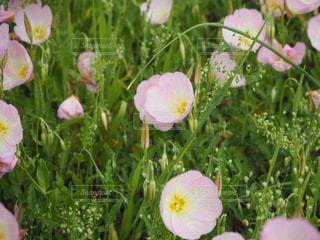 花,花絶景,別府SA
