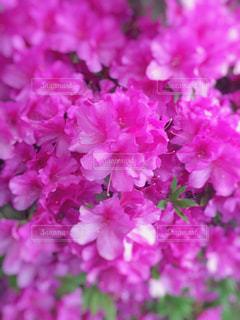 近くの花のアップの写真・画像素材[1132776]