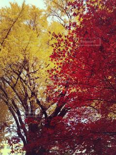 近くの木のアップ - No.875742