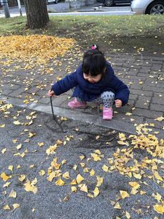 イチョウの葉っぱがいっぱいの写真・画像素材[883047]