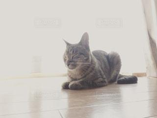 愛猫の写真・画像素材[2176539]