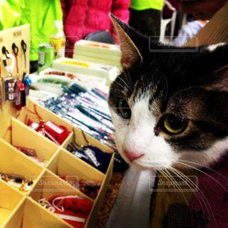 猫の写真・画像素材[299033]