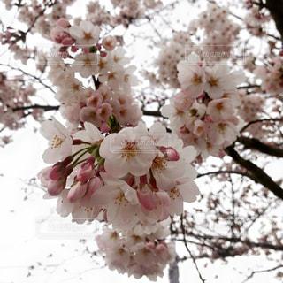 花の写真・画像素材[404149]