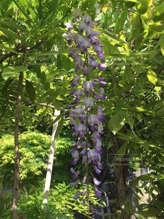 庭の緑の植物の写真・画像素材[1161668]