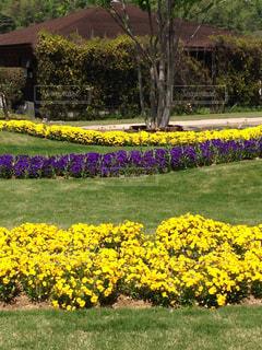 自然,風景,花,黄色