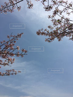 自然,風景,空,花,青空,花見
