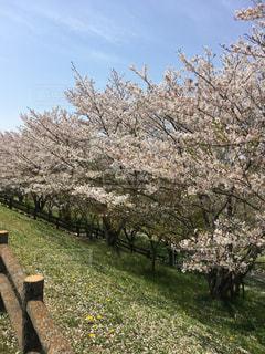 自然,風景,空,花,青空,花見,牧場