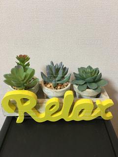 植物,黄色,リラックス,サボテン